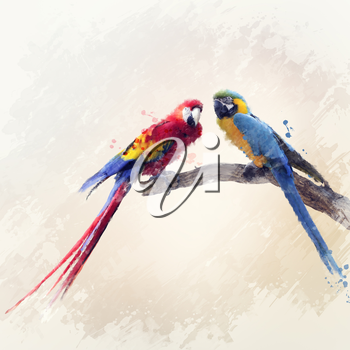 Digital Painting Of Two Macaw Parrots