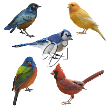 Birds set watercolor painting, isolated on white background