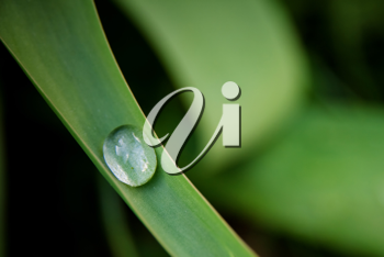 water drop on a herb - Ecology concept