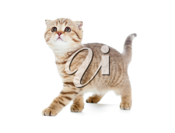 Royalty Free Photo of a Kitten