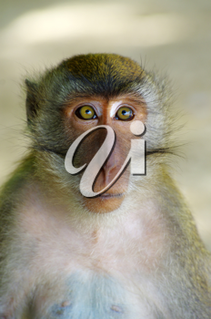 Royalty Free Photo of a Monkey
