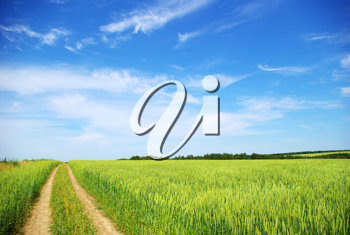 Royalty Free Photo of a Path in a Field
