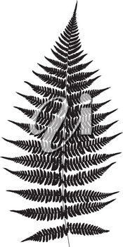 Fern leaf silhouette. Vector illustration