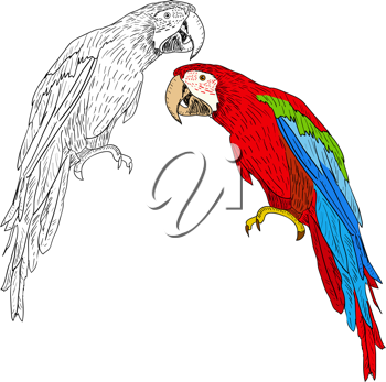 Royalty Free Clipart Image of Macaws
