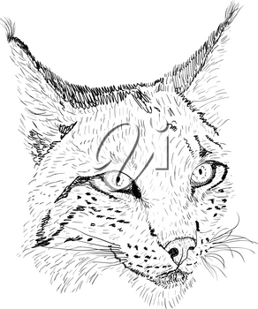 Sketch silhouette sketch lynx face on white background illustration.
