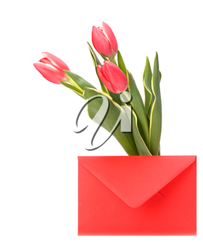 greeting card  with pink tulips  isolated on white background