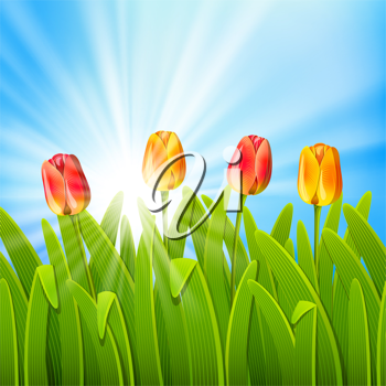 Royalty Free Clipart Image of Tulips and Sunlight