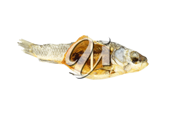 dried fish isolated on white background