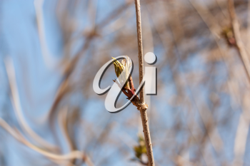 the opened buds on the trees