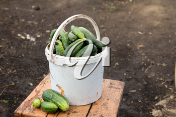 cucumbers in white bucket