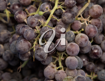 black grapes as background
