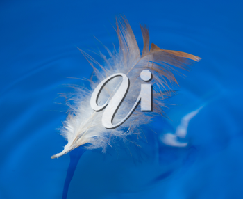 feather in the blue water