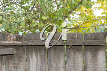 wooden fence in nature as the background