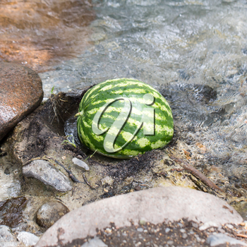 watermelon in the river