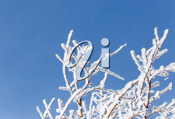 snow on the branches of a tree against the blue sky