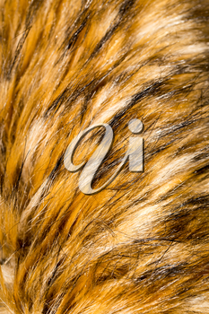 Fur animal as a background. texture