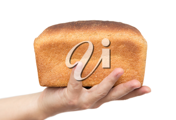 Fresh bread in his hand on a white background