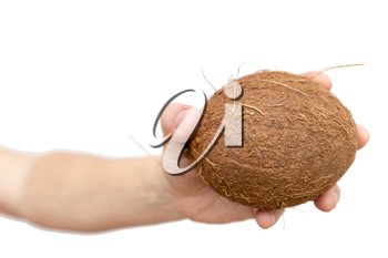Royalty Free Photo of a Hand Holding a Coconut