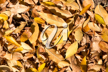 yellow leaves on the ground as a background