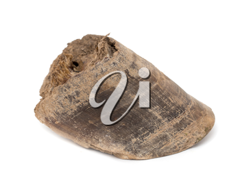 old horse's hoof on a white background