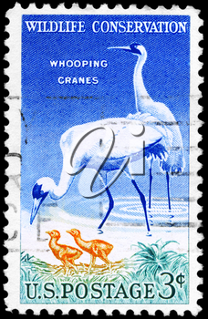 Royalty Free Photo of 1957 US Stamp Shows the Whooping Cranes, Wildlife Conservation