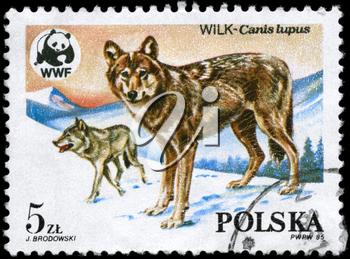 POLAND - CIRCA 1985: A Stamp printed in POLAND shows image of a Wolves and Wildlife Fund Emblem with the description Canis lupus from the series Endangered Wildlife, circa 1985