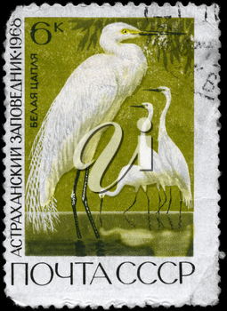 USSR - CIRCA 1968: A Stamp printed in USSR shows image of a Great White Egret from the series Astrakhan state reservations, circa 1968