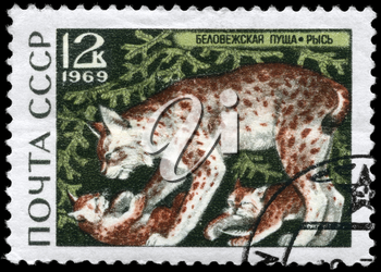 USSR - CIRCA 1969: A Stamp printed in USSR shows image of a Lynx and Cubs from the series Belovezhskaya Forest reservation, circa 1969