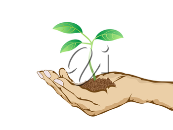 Royalty Free Clipart Image of a Person Holding a Plant