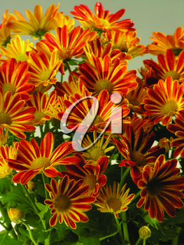 Royalty Free Photo of a Bouquet of Gazanias