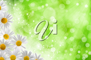 Abstract spring backgrounds with daisy flowers and blured bokeh