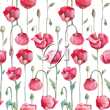 Red poppies on white background. Hand drawn Seamless watercolor floral pattern.