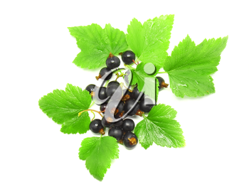 Black currant with leaf on white background. Isolated.
