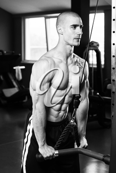 Young Muscular Fitness Bodybuilder Doing Heavy Weight Exercise For Triceps In The Gym