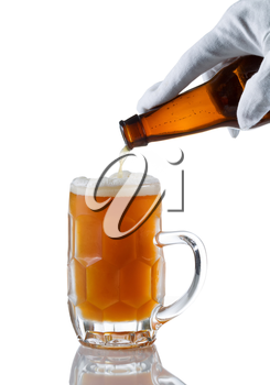 Vertical image of gloved hand pouring amber color beer into glass stein on white with reflection