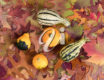 Overhead view of real autumn gourd decorations resting on leaves.