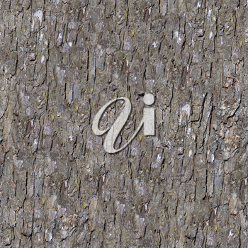 Royalty Free Photo of a Bark Background