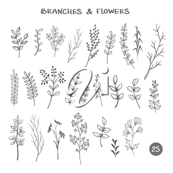 Set of branches. Hand drawn black ink isolated floral decorative elements. Herb silhouette collection for design seamless patterns fabric wrapping paper wallpaper web device cover.