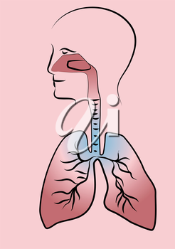 respiratory system. human silhouette with schematic respiratory system
