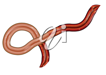 earthworm isolated on a white background. 10 EPS