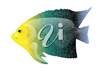 tropical fish isolated on a white background