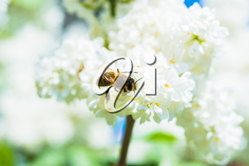Royalty Free Photo of a Bee Polinating Flowers