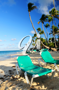 Sandy beach of tropical resort with palm trees and reclining chairs