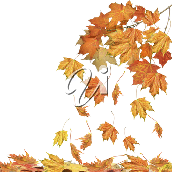 Royalty Free Photo of Falling Autumn Leaves