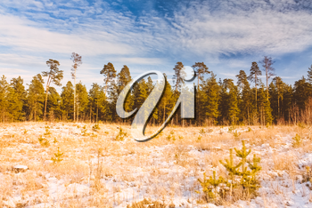 First Snow Covered The Dry Yellow Grass In Forest. Russian Nature.