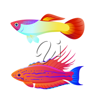 Aquarium inhabitant guppy and swordtail fish set. Colorful sea animal vector illustration for information isolated on white for nautical magazine.