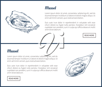 Mussels posters set of delicatessen meal. Marine dwellers poster with headlines editable information of edible species raw food vector illustration