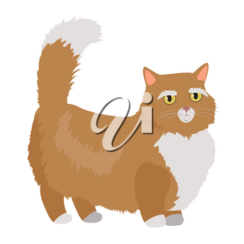 Munchkin cat breed. Cute red short-legged cat with raised tail flat vector illustration isolated on white background. Domestic friend and companion animal. For pet shop ad, hobby concept, breeding