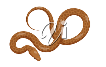 Curved slither python top view icon. Creeping glossy spotted brown tropical snake eves vector isolated on white background. Crawling poisonous reptile illustration for wild nature concepts, zoo ad