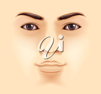 Illustration of the features of a human face